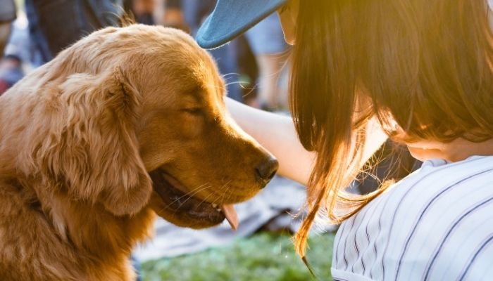How to Train Your Dog to Be Social
